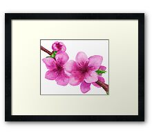Pink flowers of peach Framed Print