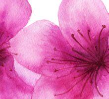 Pink flowers of peach Sticker