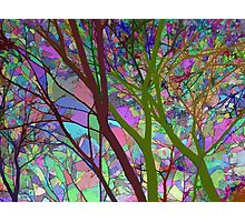 Stained Glass Nature Two Photographic Print