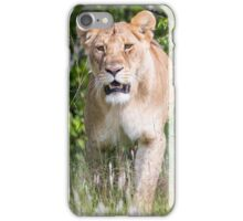 Lion - Africa iPhone Case/Skin