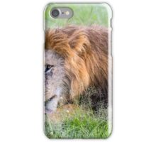 Maned Lion - Africa iPhone Case/Skin