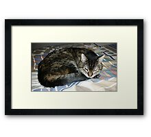 RIP Zoe the Wondercat Framed Print