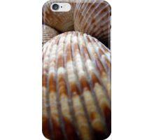 Macro Photo Sea Shell