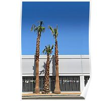 Three palm trees in Vegas Poster