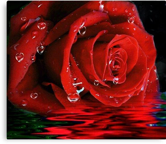 Tears of Love by Morag Bates