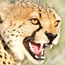 Nice Kitty...Namibia Africa by Beth  Wode