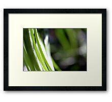 Macro Photo Green Grass