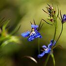 Hoverfly on Lobelia  by shane22