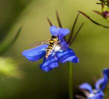 Hoverfly on Lobelia  Sticker