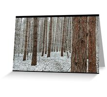 April snowstorm on pines Greeting Card
