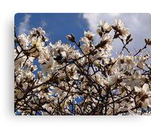 Many Magnolias Canvas Print