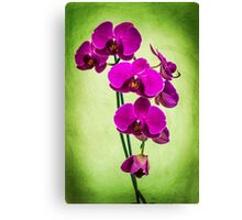 Orchid in Green Canvas Print
