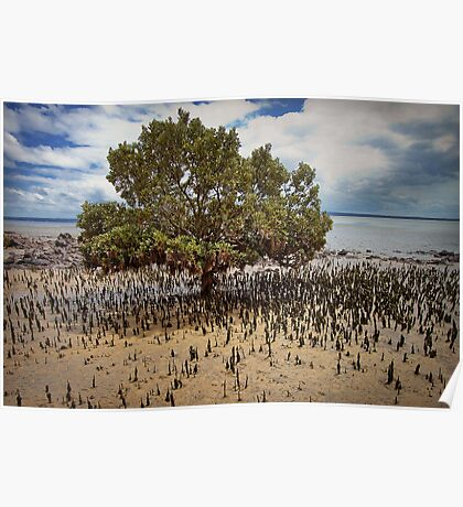 Mangrove tree - Tenby Point Poster