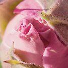 Pinkalicous by MarthaBurns