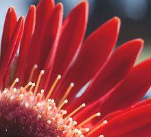 Shooting Stars and Crimson Petals by MarthaBurns