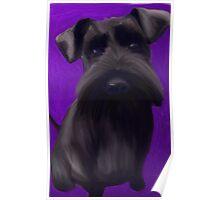 Schnauzer Puppy Poster
