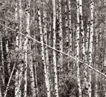 Birch Grove in Black and White Sticker