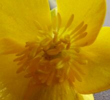 yellow waxy flower Sticker
