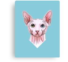 Sphynx cat portrait Canvas Print