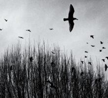 Birds and Bush under moody sky Sticker