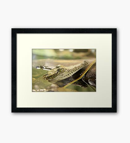 Baby Crocodile Framed Print