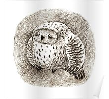 Great Grey Owl Sleeping In a Hollow Poster