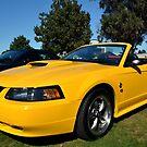 2004 Ford Mustang (40th Anniversary Edition) by Glenn Bumford