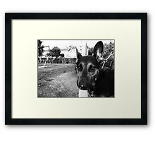 Silly Puppy Framed Print