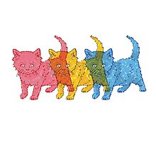 RGB Kittens Photographic Print