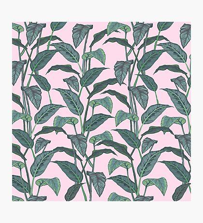 Pink Leaf Photographic Print