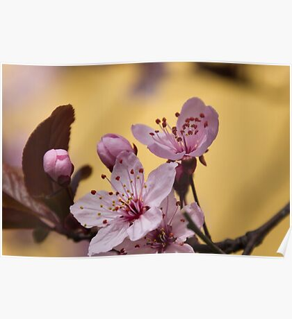 pink flowers on the tree Poster