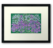 Pink phloxes flowers Framed Print