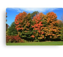 Tress  in Fall colours.  Canvas Print