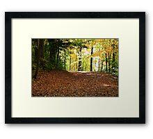 Forest road in Fall season. Framed Print