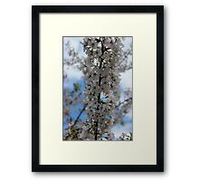 Cherry Blossoms II Framed Print