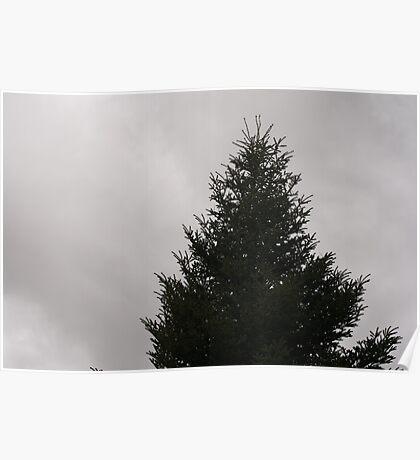 Fir tree winter Poster