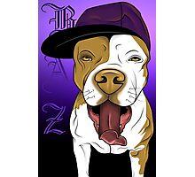 art dog pitbull Photographic Print