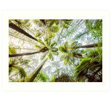 Morning Forest Fog - Redwoods, Whakarewarewa Art Print