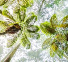 Morning Forest Fog - Redwoods, Whakarewarewa Sticker