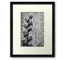 The Climber Mono Framed Print