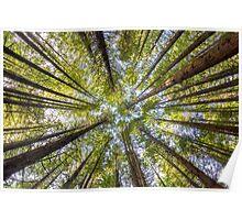 Redwood Heaven Poster
