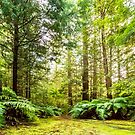 Green Wonderland of Whakarewarewa Forest by SeeOneSoul