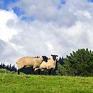 Shy Sheep by SeeOneSoul