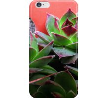 Plants - hens and chicks (2016) iPhone Case/Skin