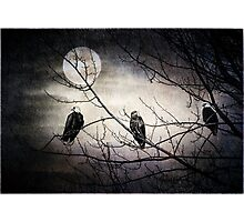 Three Bald Eagles under the Full Moon  Photographic Print