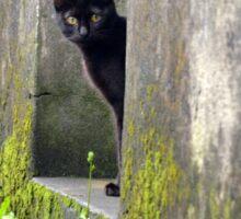 Black Cat Play Sticker