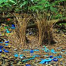 Bowerbird's Bower by Penny Smith