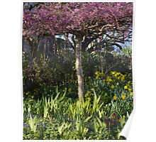 Cherry blossoms and daffodil blooms Poster