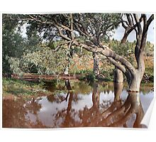Creek and gumtrees, Flinders Ranges, Australia Poster