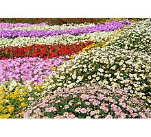 Colorful rows of flowers in the park. Photographic Print